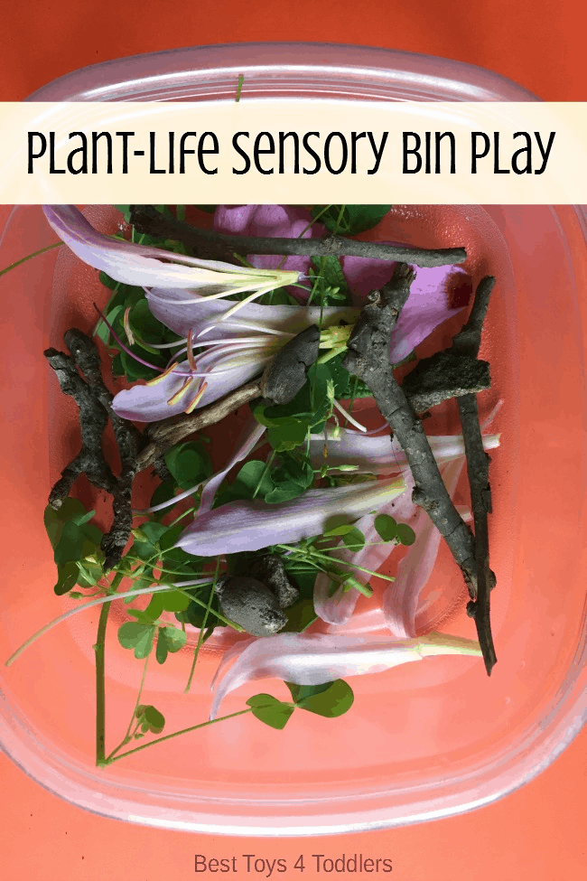 Nature activity - plant life sensory bin